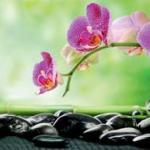 Орхидеи 0038