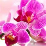 Орхидеи 0117