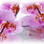 Орхидеи 0127