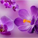 Орхидеи 0128