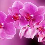 Орхидеи 0134