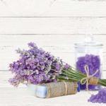 Фиолетовые цветы 0142