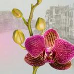 Орхидеи 0169