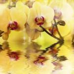 Орхидеи 0250