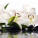 Орхидеи 0289