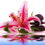 Орхидеи 0325