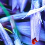 Фиолетовые цветы 0433