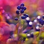 Фиолетовые цветы 0565