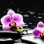 Орхидеи 0649