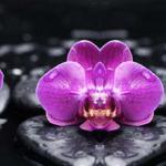 Орхидеи 0659
