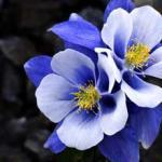 Фиолетовые цветы 0663