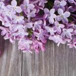 Фиолетовые цветы 0666