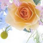 Розы № 0668