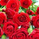 Розы № 0679