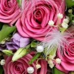Розы № 0685