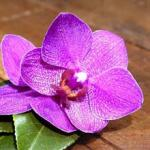Орхидеи 0719