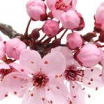 Розово-малиновые цветы № 0824