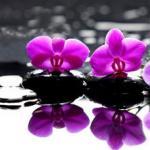 Орхидеи 0883