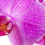 Орхидеи 0909
