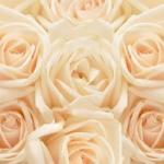 Розы № 0917