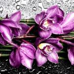 Орхидеи 0921