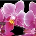 Орхидеи 0936