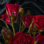 Розы № 0997
