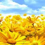 Желтые цветы № 1036