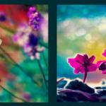 Фиолетовые цветы 1114