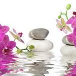 Орхидеи 1137