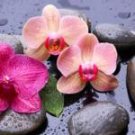 Орхидеи 1145