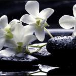 Орхидеи 1219