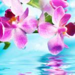 Орхидеи 1255