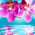 Орхидеи 1256