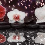 Орхидеи 1271