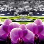 Орхидеи 1346