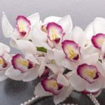 Орхидеи 1416