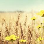 Желтые цветы № 1432