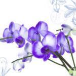 Орхидеи 1445