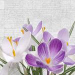 Фиолетовые цветы 1495