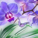 Орхидеи 1500