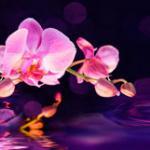 Орхидеи 1504