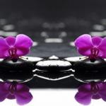 Орхидеи 1546