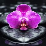 Орхидеи 1566