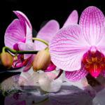 Орхидеи 1649