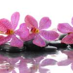 Орхидеи 1691