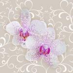 Орхидеи 1744