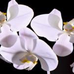 Орхидеи 1758