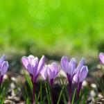 Фиолетовые цветы 2139