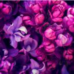Фиолетовые цветы 2233